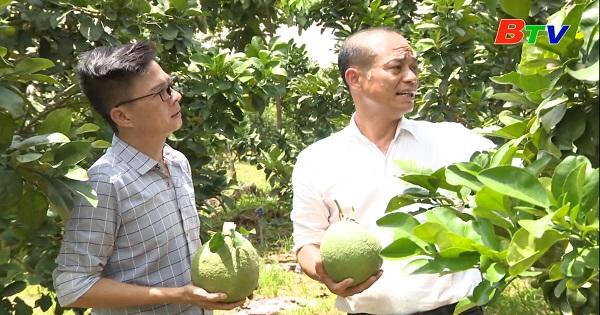 Chuyện về một nông dân tiêu biểu ở xã Minh Hòa, huyện Dầu Tiếng