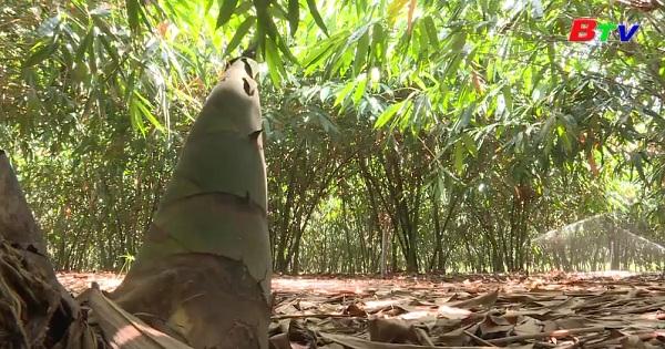 Kỹ thuật trồng tre lấy măng