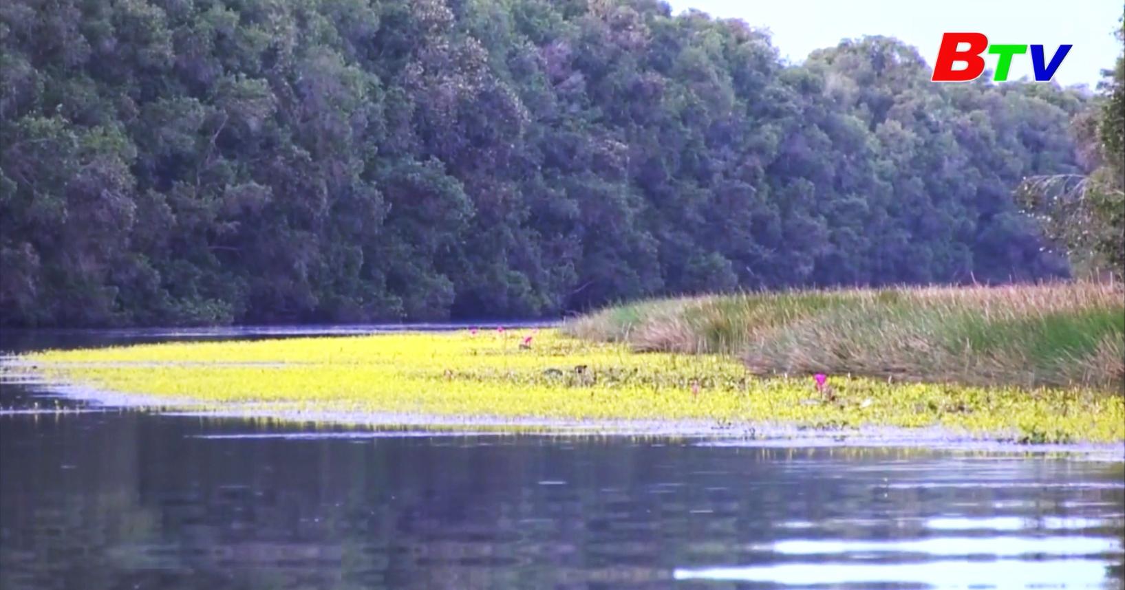 Hoa nhĩ cán vàng nở rộ ở Vườn Quốc gia Tràm Chim