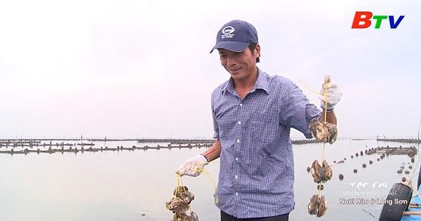 Nuôi hàu ở Long Sơn