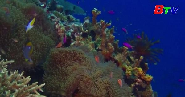 Rạn san hô Great Barrier khó có thể phục