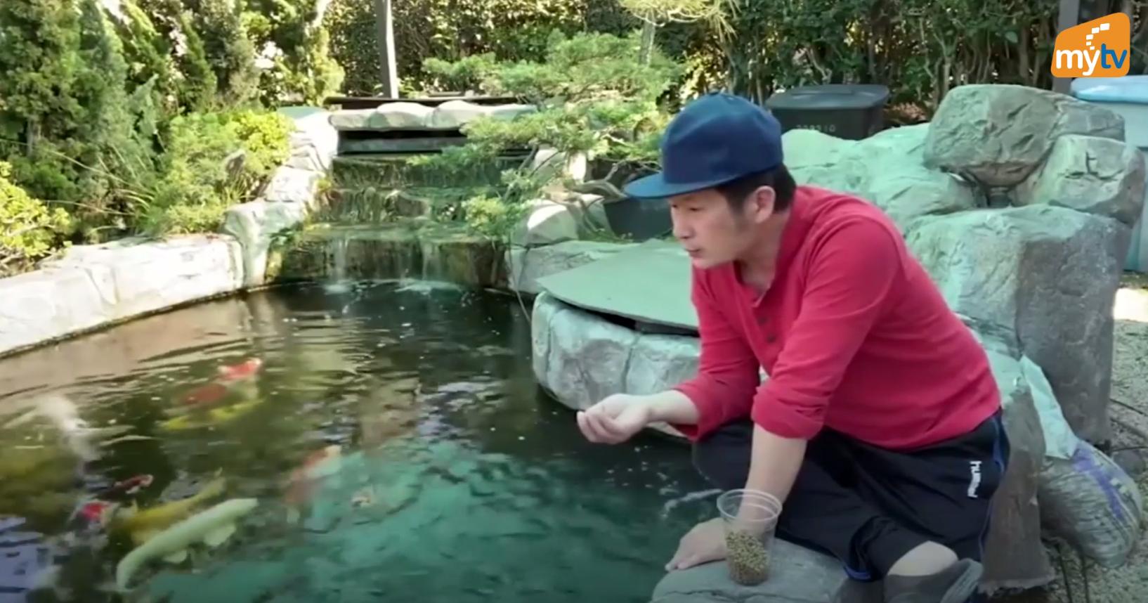 Hồ cá Koi được nuôi hơn 10 năm của ca sĩ Bằng Kiều