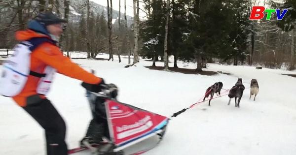 Cuộc đua chó kéo xe trượt tuyết