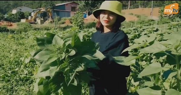 Diễn viên Oanh Kiều thu hoạch hoa hướng dương ở nhà vườn