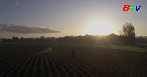 Hà Lan - Cánh đồng tỏi tây tỏa sáng dưới ánh đèn Led