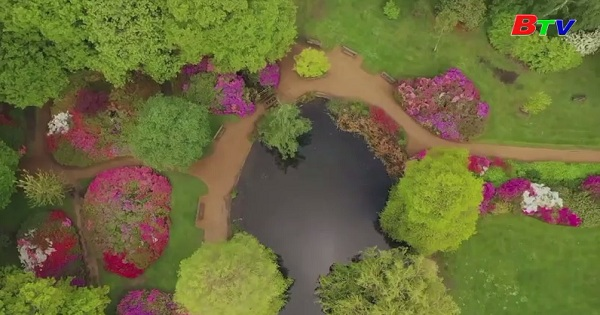 Chiêm ngưỡng công viên Hoàng gia Anh giữa mùa hoa nở rộ