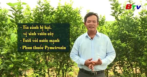 Quản lý côn trùng trên cây có múi