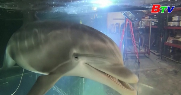 Cá heo Robot - Hướng tiếp cận nhân văn góp phần bảo vệ động vật hoang dã