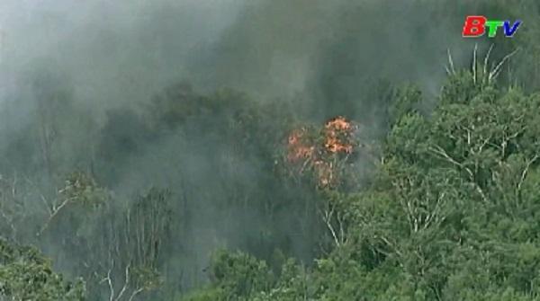 Australia - Khói mù độc hại từ các đám cháy rừng bao phủ Sydney