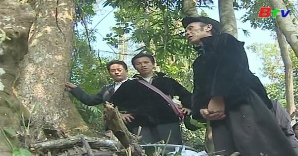Chuyện giữ rừng ở quê tôi