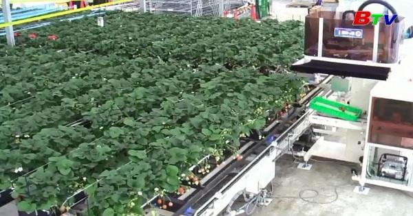 Dùng Robot để trồng trọt - Nền nông nghiệp công nghệ cao trong tương lai