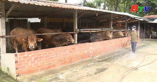 Bình Dương triển khai nhiều biện pháp phòng chống bệnh viêm da nổi cục trên đàn gia súc
