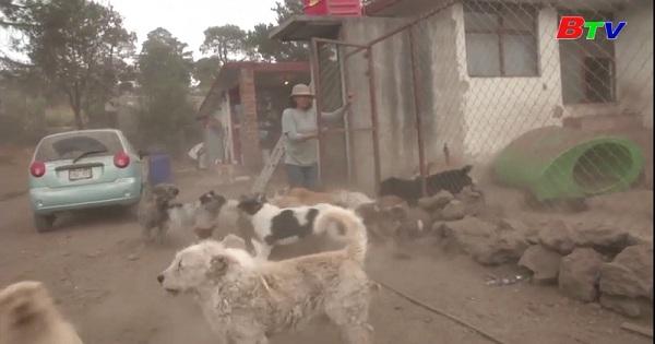 Mexico thúc đẩy nhận nuôi thú cưng trong thời kỳ giãn cách