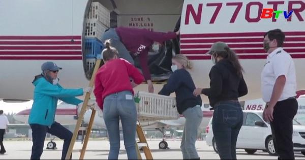 Hơn 1000 con gà mai mắn được giải cứu khỏi trang trại Iowa, Mỹ