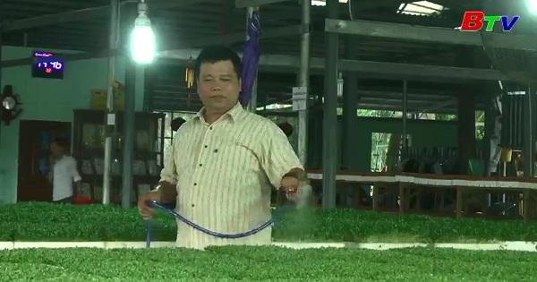 Trở thành tỉ phú từ mô hình trồng rau mầm
