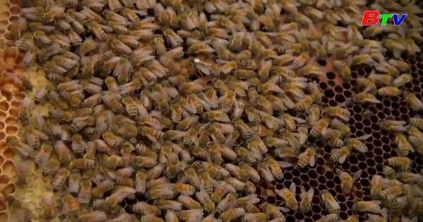 Unesco và nhà sản xuất nước hoa Guerlain hợp tác bảo vệ loài ong