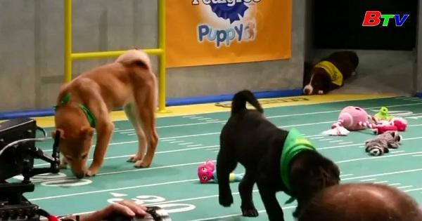 Giải đấu Puppy Bowl  dành cho những chú khuyển