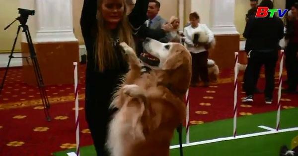 Màn trình diễn của những chú chó Trung Quốc ở Mĩ