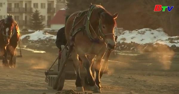 Nhật Bản - Những người đua ngựa Banei Keiba chuẩn bị cho lễ hội rước đuốc Olympic