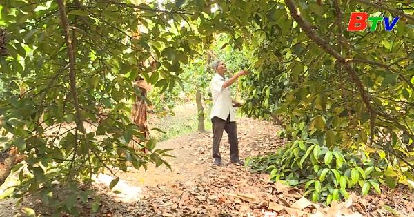 Chăm sóc vườn cây ăn quả