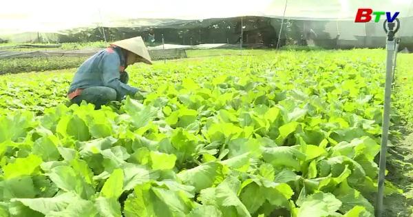 Hiệu quả từ chính sách hỗ trợ nuôi trồng áp dụng tiêu chuẩn VietGAP ở Bình Dương