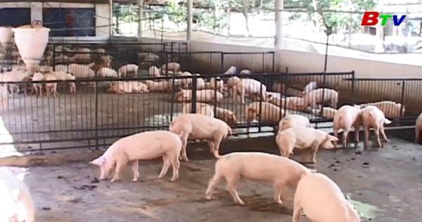 Cần nâng cao chế tài xử lý cơ sở chăn nuôi không đảm bảo chất lượng an toàn thực phẩm