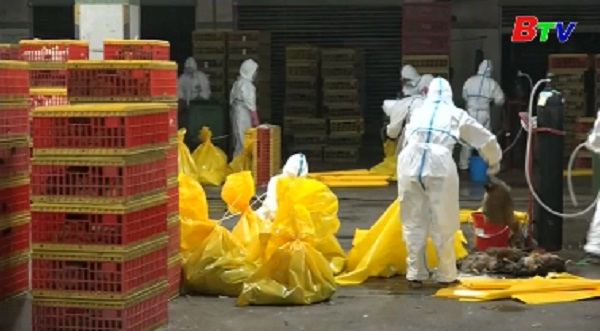 Trung Quốc nỗ lực khống chế sự bùng phát dịch cúm gia cầm H7N9