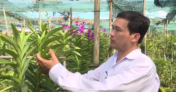 Kỹ thuật trồng hoa phong lan cắt cành