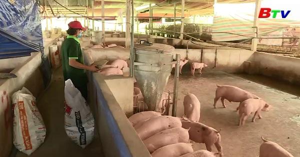 Chăn nuôi heo an toàn sinh học hướng hữu cơ