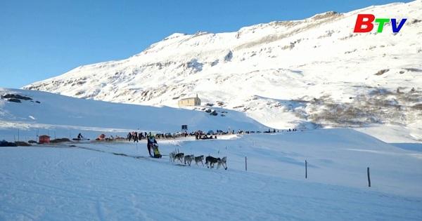 Khép lại cuộc đua chó kéo xe trượt tuyết qua dãy ALPS