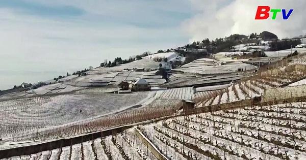 Thụy Sỹ - Vườn nho di sản thế giới chìm trong tuyết trắng