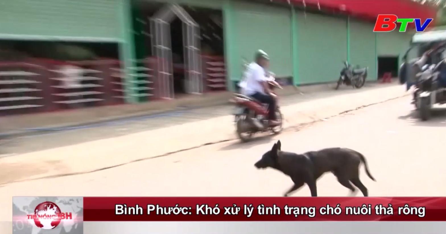 Bình Phước: Khó xử lý tình trạng nuôi chó thả rong