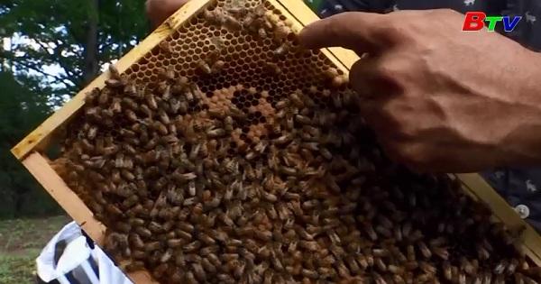 Ong di cư xây tổ tại trụ sở LHQ ở New York