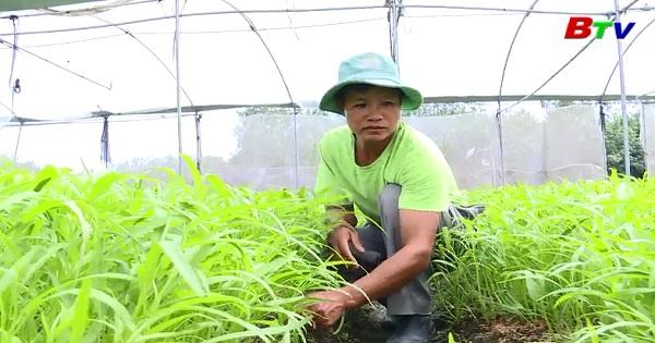 Người cựu chiến binh năng động trong phát triển kinh tế trang trại