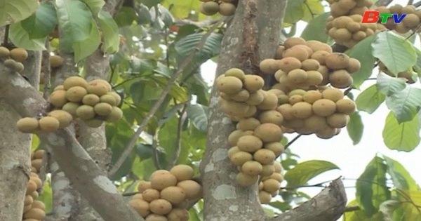 Xem xét dự án phát triển vườn cây ăn quả và chuỗi sản xuất rau an toàn