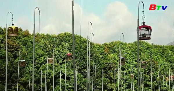 Cuộc thi chim hót ở SIngapore