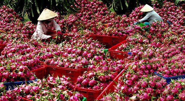 Trái cây Việt thay đổi tư duy để chiến lĩnh thị trường nội