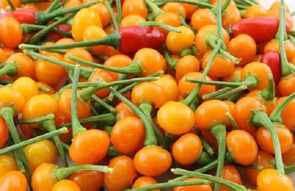 50 triệu đồng một kg ớt đắt nhất thế giới