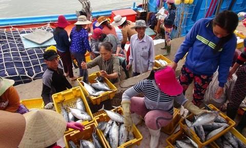Tàu đầy ắp cá trở về từ Hoàng Sa