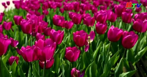 Đến Trung Quốc chiêm ngưỡng muôn hoa nở rộ