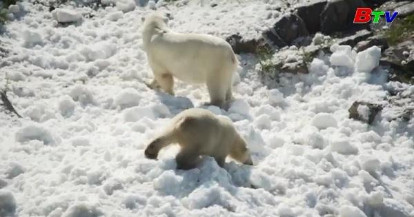 Công viên hoang dã Rauna tạo sân chơi cho gấu Bắc cực