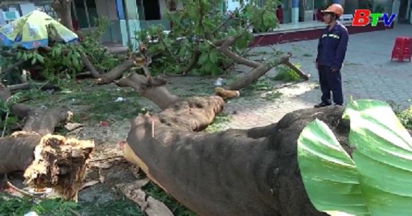 Bộ Giáo dục và Đào tạo đề nghị các trường rà soát cây xanh