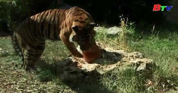 Vườn thú Bioparco giải nhiệt cho các loài vật khi thời tiết nóng bức