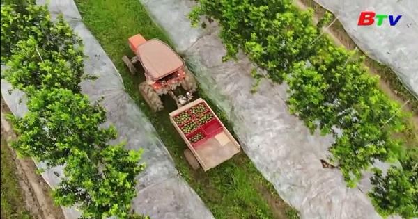 Bình Dương phát triển sản xuất nông nghiệp theo hướng hữu cơ