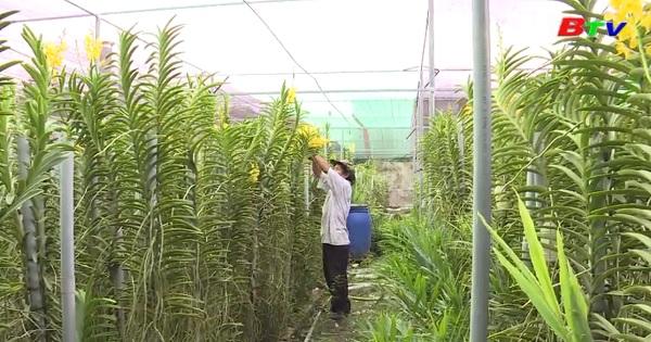 Hợp tác xã kiểu mới - bệ đỡ cho phát triển nông nghiệp và xây dựng nông thôn mới