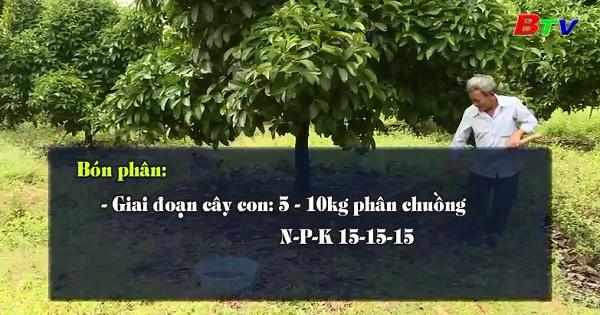Mô hình trồng măng cụt Việt Gap