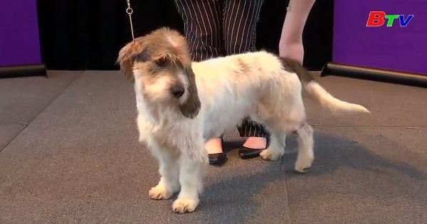Thêm hai giống chó mới tham gia cuộc thi Westminster Kennel  Club lần thứ 143