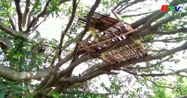 Ấn Độ tự cách li trên cây để ngăn chặn covid-19