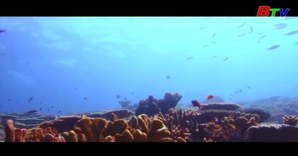 Hy vọng mới giải cứu rạn san hô lớn nhất thế giới