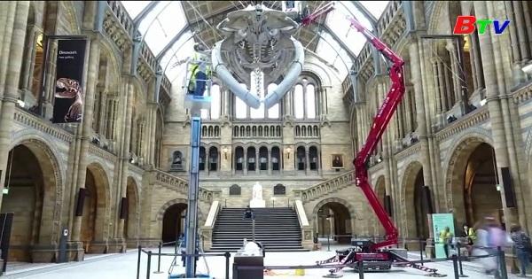 Bảo tàng lịch sử quốc gia Anh sẵn sàng mở cửa lại